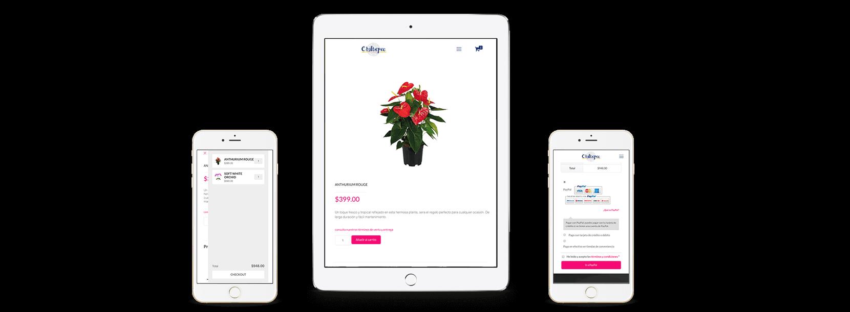 mockup flores de chiltepec